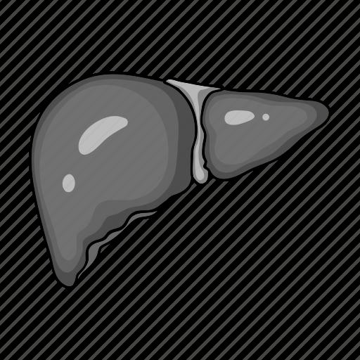 Anatomy, health, human, liver, medicine, organ icon - Download on Iconfinder