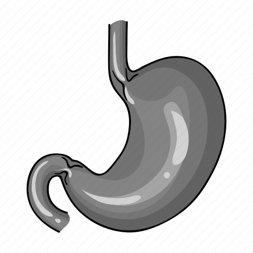 anatomy, health, human, medicine, organ, stomach icon