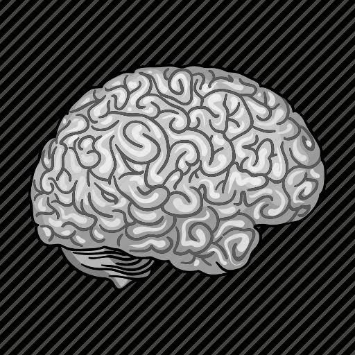 anatomy, brain, head, health, human, medicine, organ icon