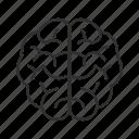 brain, cerebrum, fissures, human brain, nervous system, nervous tissue, sulci icon