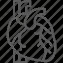 anatomy, artery, heart, human, medical, organ, vein icon