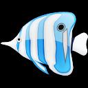 animal, fish