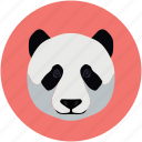 animals, panda, zoo icon