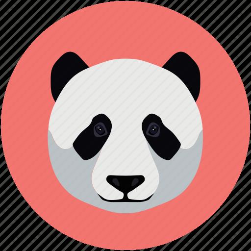 animals, panda, zoo icon