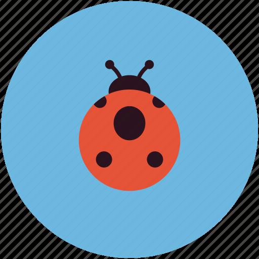 bug, ladybird, problem icon