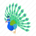beautiful, bird, cartoon, design, feather, illustration, peacock icon