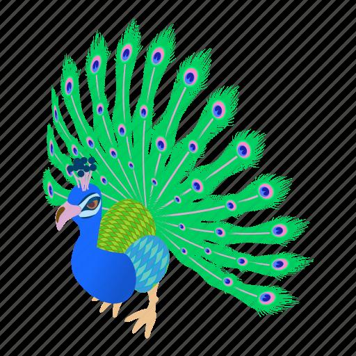 beautiful, bird, cartoon, design, feather, illustration, peacock icon