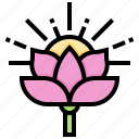 flower, india, lotus, plant