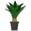 agave plant, ecology, houseplant decoration, indoor plant, ornamental plant, potted plant icon