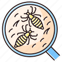 bug, color, insect, lice, louse, parasite, pediculosis icon