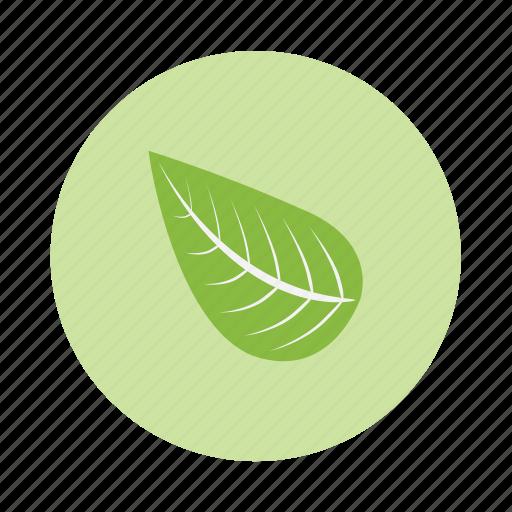 eco, leaf icon