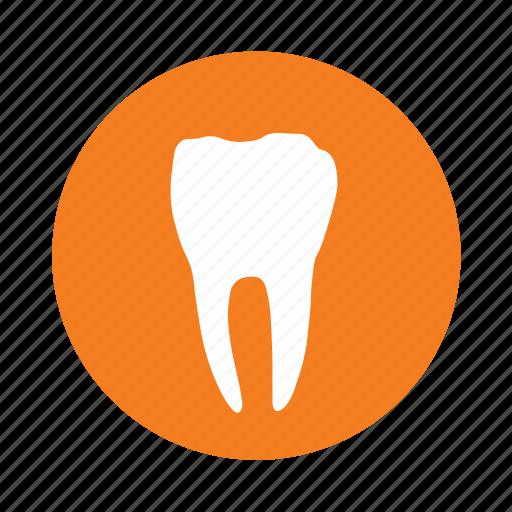 dental clinic, dentist, dentistry, teeth, tooth icon