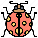 beetle, garden, insect, ladybug, spotted