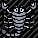 danger, pest, scorpion, sting, venomous