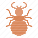 flea, insect, animal, nature