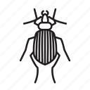 animal, beetle, bug, bugs, creature, insect icon