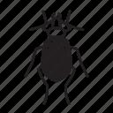 animal, beetle, bug, bugs, creature, insect