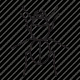 animal, beetle, bug, bugs, creature, insect icon