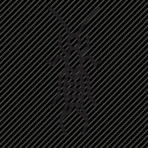 animal, bug, bugs, creature, earwig, insect icon