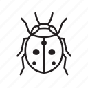 animal, bug, bugs, creature, insect, ladybug icon