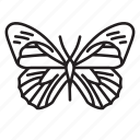 animal, bug, bugs, butterfly, creature, insect icon