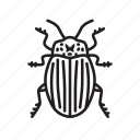 animal, beetle colorado potato, bug, bugs, creature, insect icon
