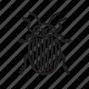 animal, beetle colorado potato, bug, bugs, creature, insect
