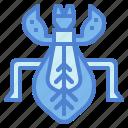 bug, grasshopper, insect, leaf