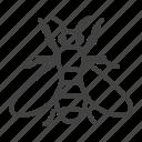bee, honeybee, insect icon