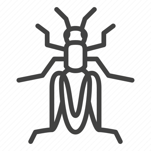 Cricket, grasshopper, insect icon - Download on Iconfinder