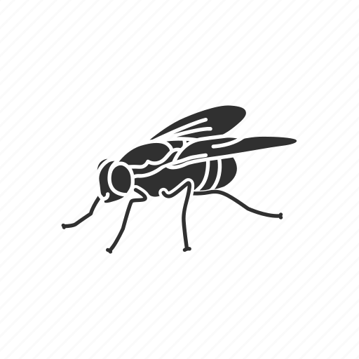Animal, bloodsucker, fly, housefly, insect, invertebrate, pest icon - Download on Iconfinder