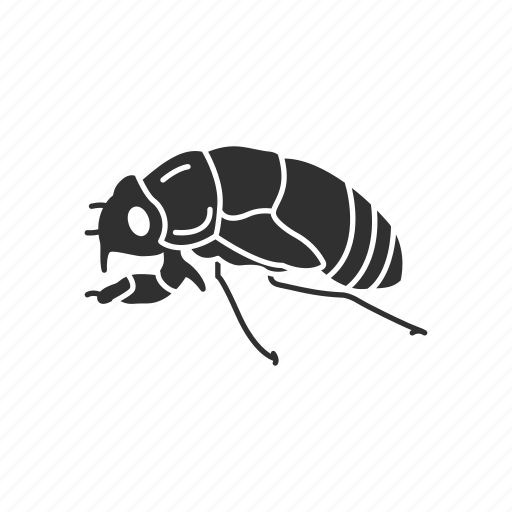 Animal, bug, cicada, flying bug, insect, invertebrate, pest icon - Download on Iconfinder