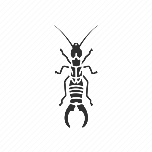 Animal, bug, earwig, insect, invertebrate, pest icon - Download on Iconfinder