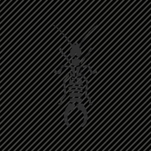 animal, bug, earwig, insect, invertebrate, pest icon