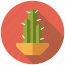 cactus, decoration, flower pot, interior icon