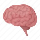 anatomy, brain, internal, medicine, nerve, organ, person icon
