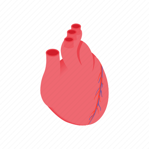 anatomical, biology, heart, human, isometric, medicine, vein icon