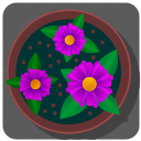 flower, plant, pot, rose