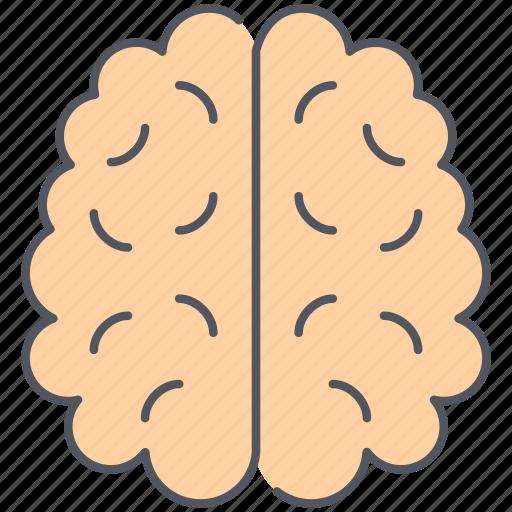 brain, human, mind, organ, processing, science, thinking icon