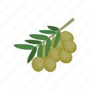 isometric, oil, food, mediterranean, healthy, olive, ingredient