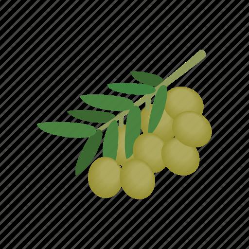food, healthy, ingredient, isometric, mediterranean, oil, olive icon