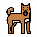 avatar, dog, japan, pet, shiba