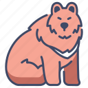 animal, bear, fur, nature, wild, wildlife