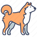 animal, dog, inu, japan, japanese, pet, shiba icon