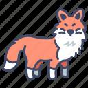 animal, cute, fox, nature, tail, wild, wildlife