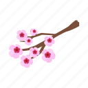 blossom, branch, cherry, flower, isometric, spring, vectior icon
