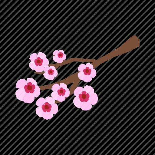 blossom, branch, cherry, flower, isometric, spring, vectior icon