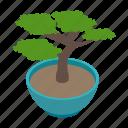 asian, bonsai, isometric, japanese, plant, tree, vectior icon