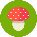 amanita, mushroom, poison icon
