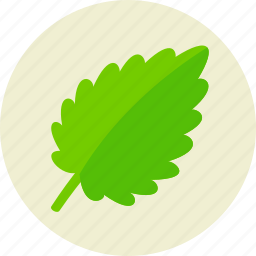 food, herb, leaf, plant, salad, vegan, vegetarian icon